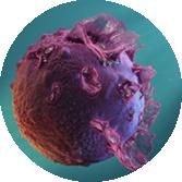 Mononucleosis under a microscope